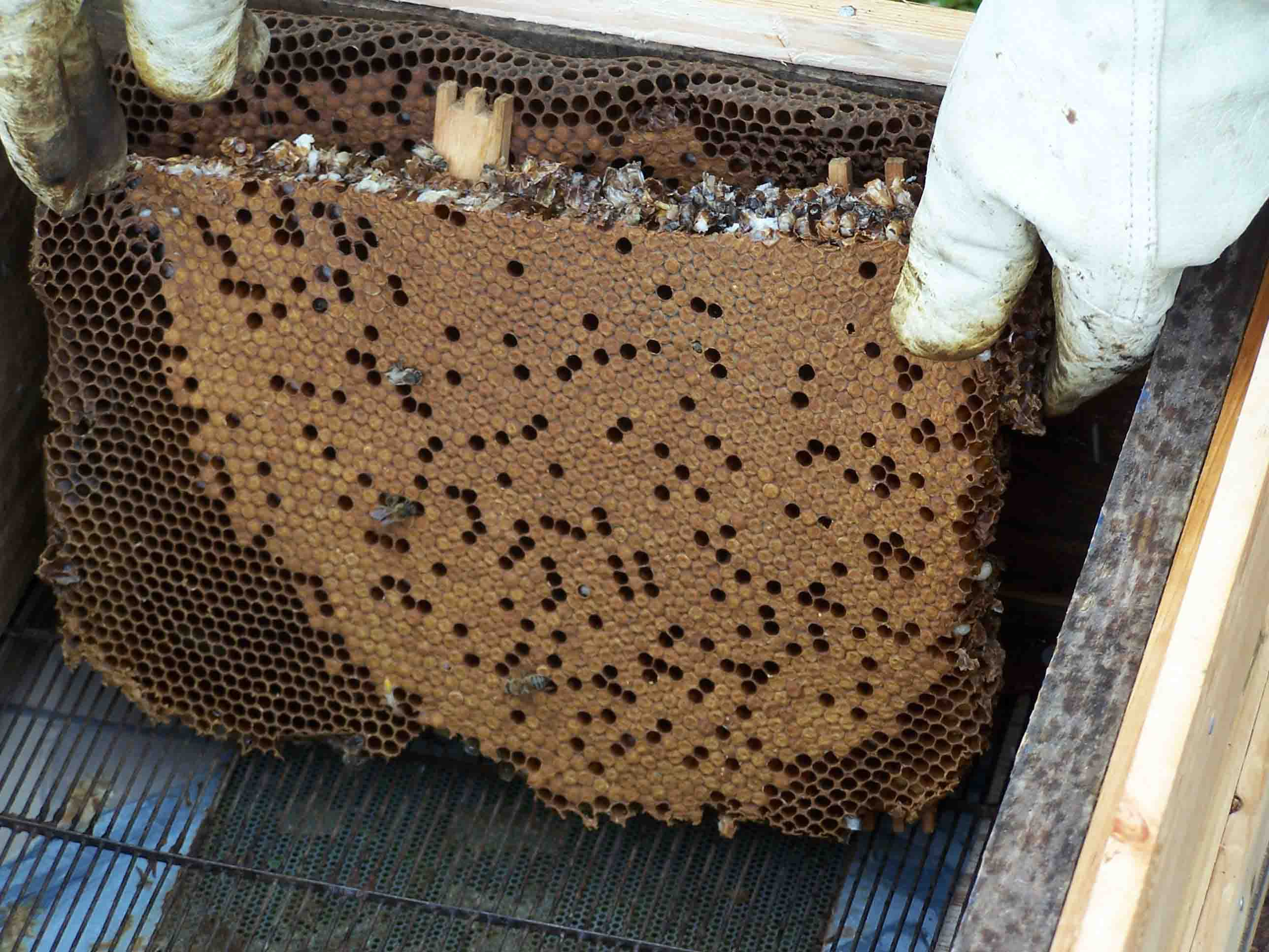 Puting The Comb Into A Brood Box