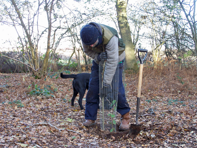 Planting a tree in our coppice woodland
